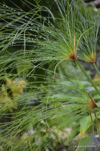 male ancienne,septembre jardin,couronne,bouquet 135.JPG