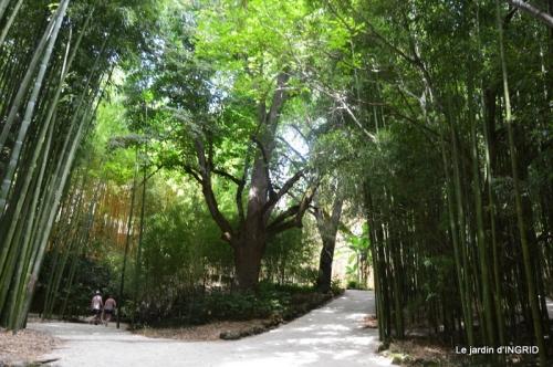 bambous Roque Gageac,jardin,bouquet 176.jpg