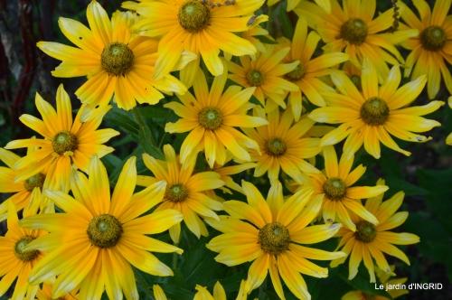 jardin été,hydrangeas,journaliste 143.JPG