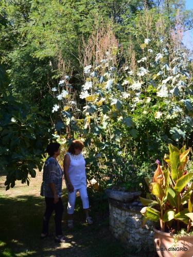 tour de jardin,bouquet,chez Bernadette, 111.JPG
