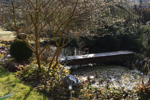 crocus,nichoirs,jonquilles,jardin,coucher du soleil 014.JPG