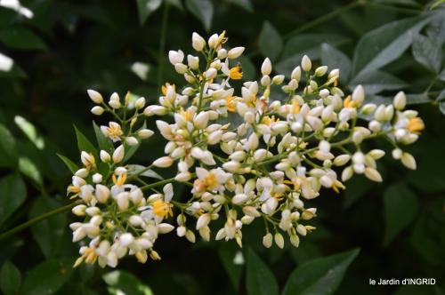 jardin,papillons,Cadouin,légumes,Sophie, 080.JPG