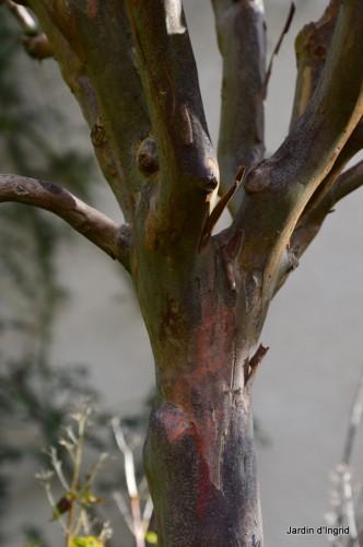 troncs,automne,vieilles photos 103.JPG