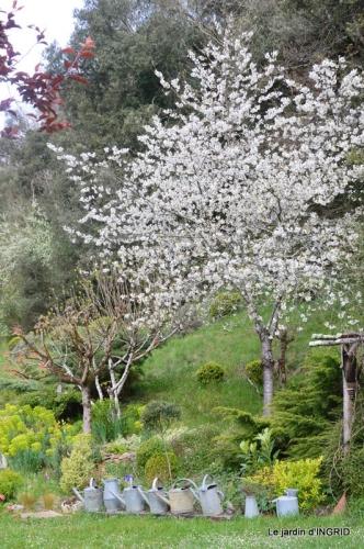 jardin confiné ,osier,magnolia jaune 048.JPG