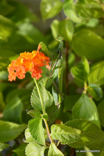 jardin,St Avit Seigneur brocante,Neuvic fête des plantes 043.JPG