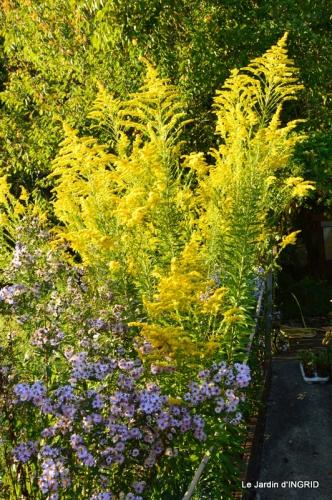 jardin Mme Perichou,grandes fleurs,bouquet,jardin 139.JPG