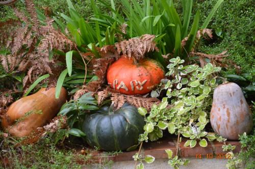 champignons,citrouilles,st Mayme de Péreyrol,fuschias,jardin aut 124.JPG