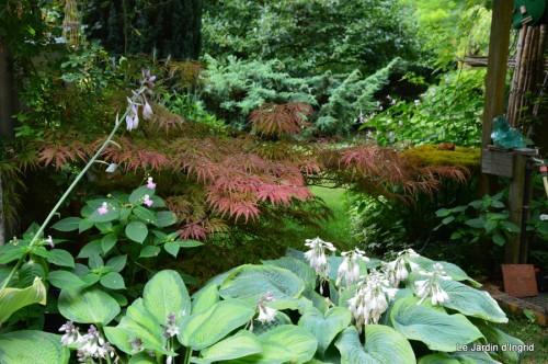chez Fabien,le canal,jardin,hémérocalles,le souci,potager 071.JPG