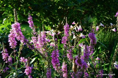 jardin,petit jardin,nénuphard,papillons 063-001.JPG