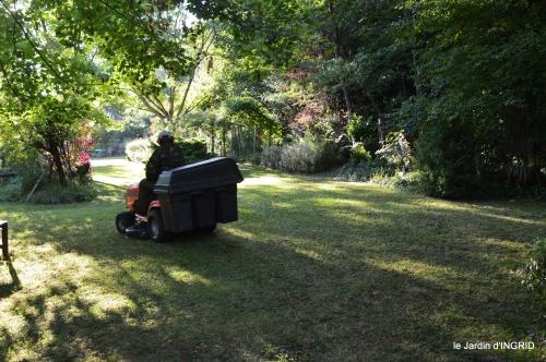 cygnes,jardin,apres la tonte 076.JPG