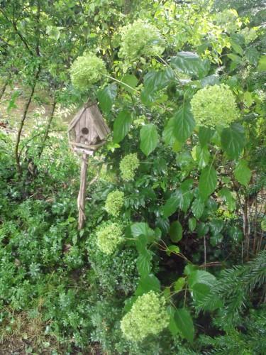 papillon.nuit,7 pigeonniers,Queyssac,jardin 019.JPG