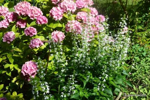 jachère,couleur,bouquet 031.JPG
