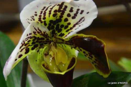 Orchidées,Noel jardiland,lever du soleil 037.JPG