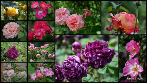 2013-06-08 visites, petit jardin1.jpg