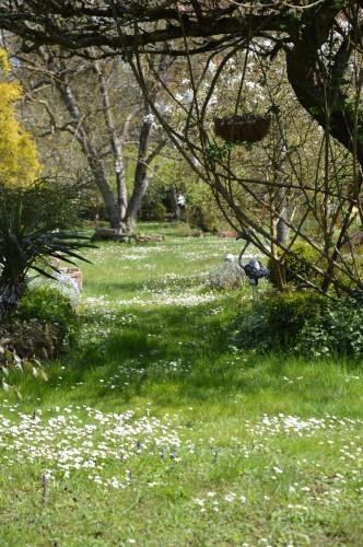 avant tonte,après,euphorbes,tulipes botaniques,autres 004.JPG