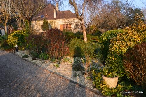 paillage,primevères,jonquilles,jardin 076.JPG