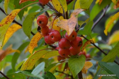 les arbres en automne,cabane 024.JPG