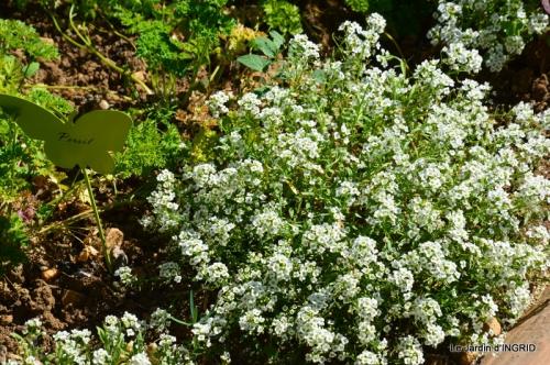 albizia,bouquet,plantes  en A 037.JPG