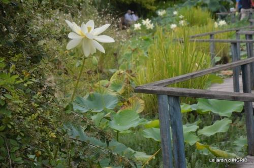 orage,puces,bouquet,Anniv.Ines,Brantome,Jardins d'eau 239.JPG