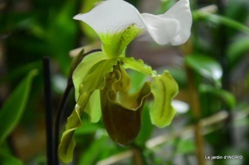 Orchidées,Noel jardiland,lever du soleil 036.JPG