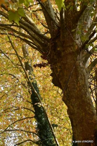 canal automne ,jardin,Ines 096.JPG