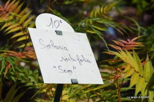 Fouleix,cygnes,Inès,jardin 102.JPG