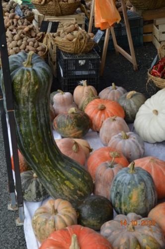 champignons,citrouilles,st Mayme de Péreyrol,fuschias,jardin aut 071.JPG