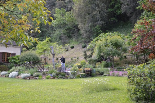 jardin,premières roses,colline,avant l'orage 037.JPG