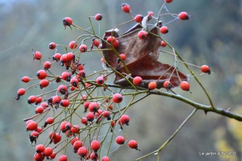 Brouillard,cypres chauve,jardinage 038.JPG