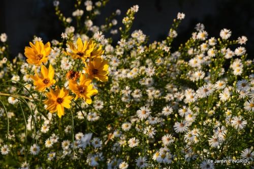 jardin Mme Perichou,grandes fleurs,bouquet,jardin 138.JPG