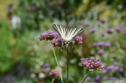 datura,papillon,Meyrals,déco Bergerac,bignonia 038.JPG