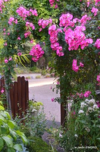 jardin,chez Bernadette,puces,cygnes,pluie 059.JPG