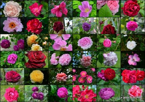 2015-05-31 roses,marguerites,MOI,fêtes des mères avec les enfants.jpg