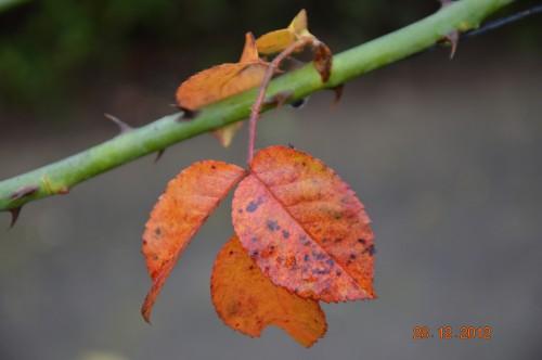 mésanges, nid frelons,fleurs décembre 124.JPG