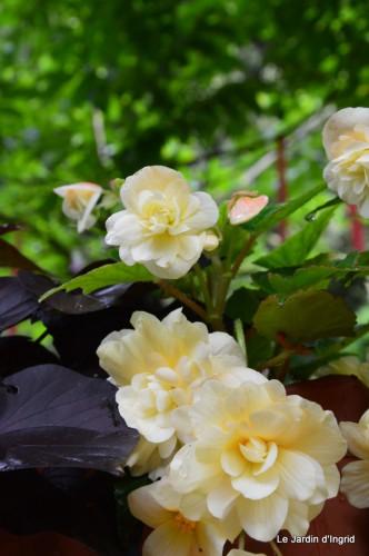 tableau,jardin,centre de table,les bégos,Cadouin,DALY,Mouleydier 116.JPG