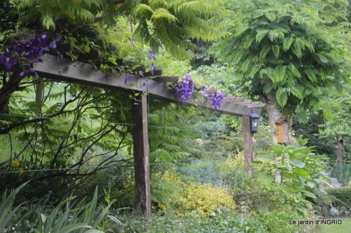 mon jardin,dégats buis, 067.JPG