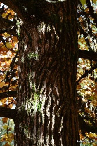 troncs,automne,vieilles photos 082.JPG