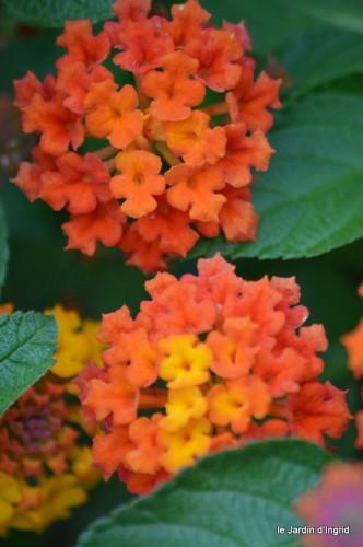 coeur des fleurs,papillons,libellules 190.JPG