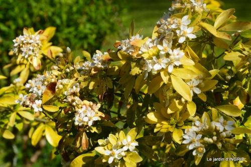 geais,jardin,printemps 065.JPG