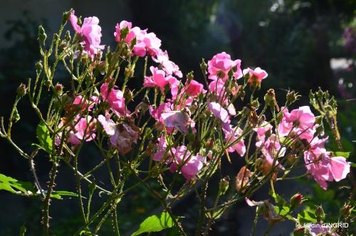 jardin pluie,Inès,Bébés cygnes,bouquet,canal 089.JPG