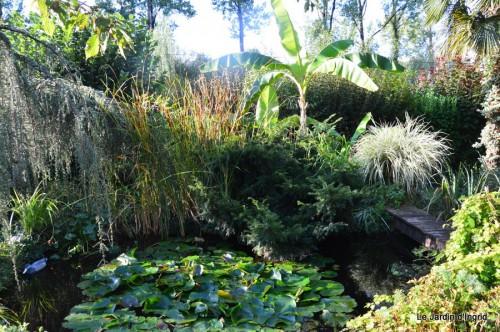 jardin,puces Lasmonzie,asters 001.JPG