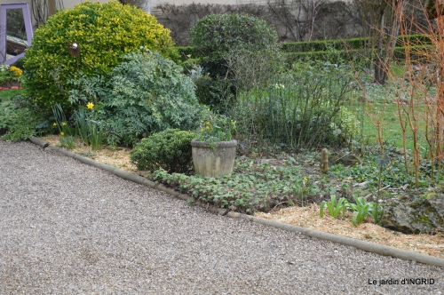 paillage,primevères,jonquilles,jardin 024.JPG