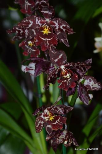 canal,jardin,Mombazillac,bonzais,orchidées 192.JPG