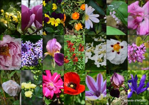 2016-04-30 fleurs du jardin1.jpg