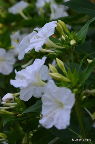 coulobre,Romane,jardin,Lamonzie Monstatruc,les filles 063.JPG
