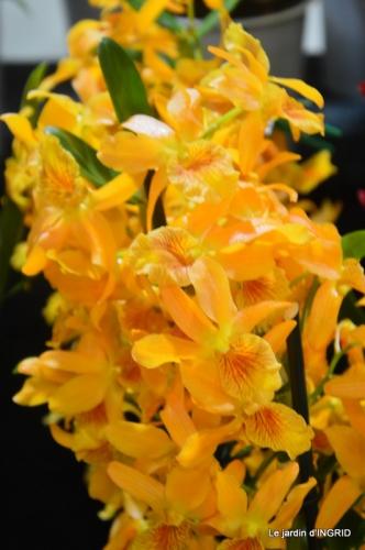 Orchidées,Noel jardiland,lever du soleil 046.JPG