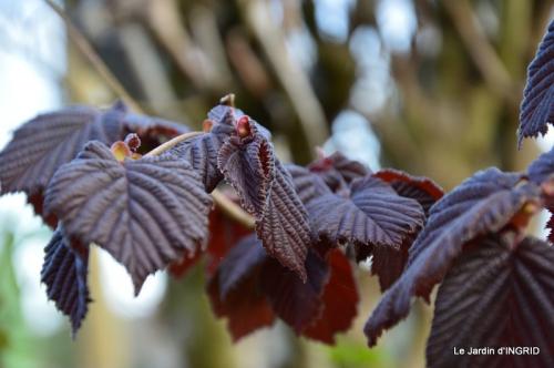 jardin printemps 120.JPG