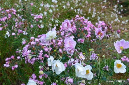 jardin Mme Perichou,grandes fleurs,bouquet,jardin 032.JPG