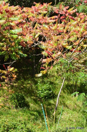 jardin octobre,chez Marylaur,Arnaud ,Ariane,la mer,sauges 215.JPG