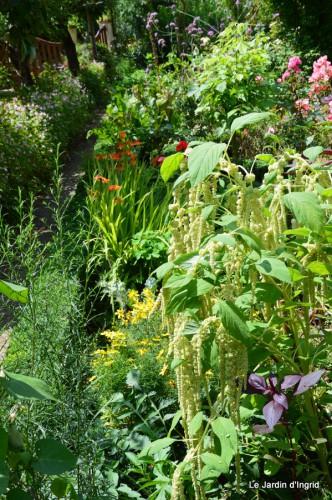jardin,petit jardin,nénuphard,papillons 047-001.JPG